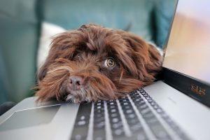 hunde på kontoret?
