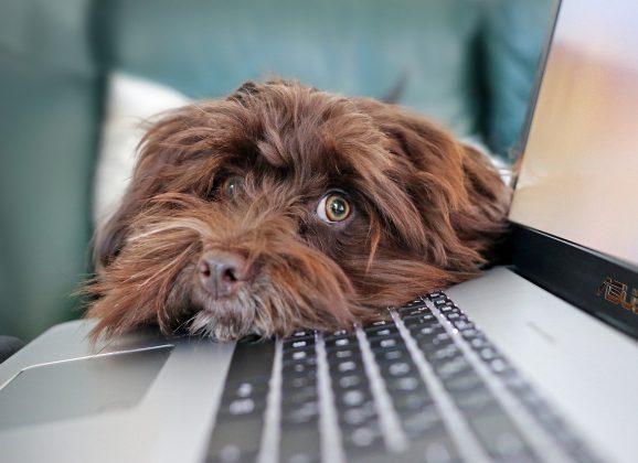 Er kæledyr på kontoret en god idé?